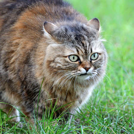 catling: cat on background of green grass Stock Photo