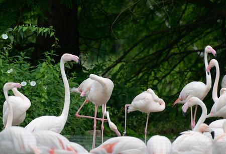 riverine: flock of flamingos on lake