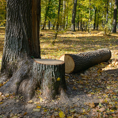 felled: Felled tree in the forest Stock Photo