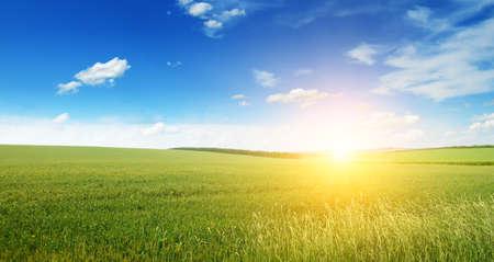 campo de flores: Hermosa puesta de sol en el campo verde