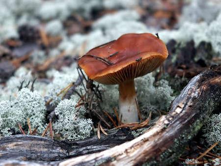 poisonous: poisonous mushroom