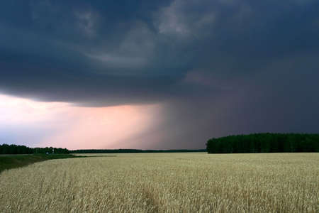 stormy clouds above the wheat field photo