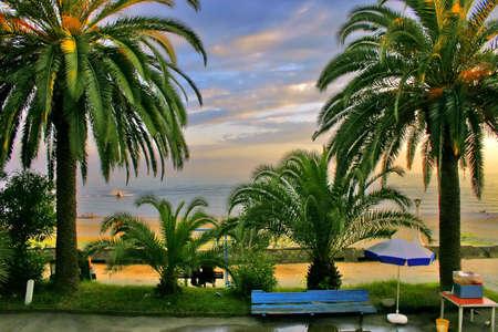 palms and coast of black sea