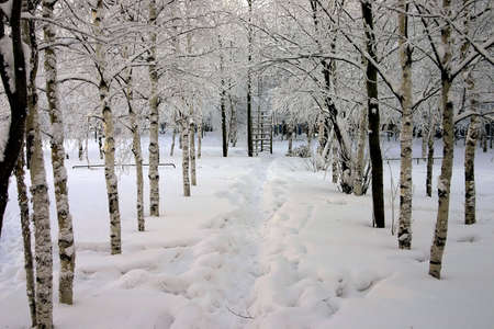 snow-bound trees in a park photo