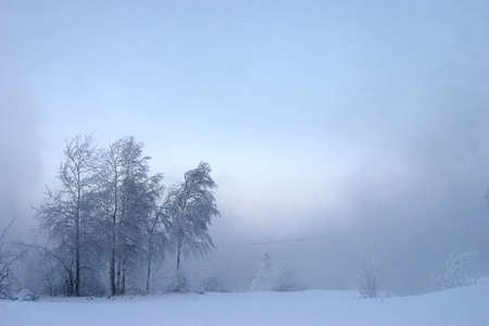 withering trees in misty haze in a gloomy winter day photo