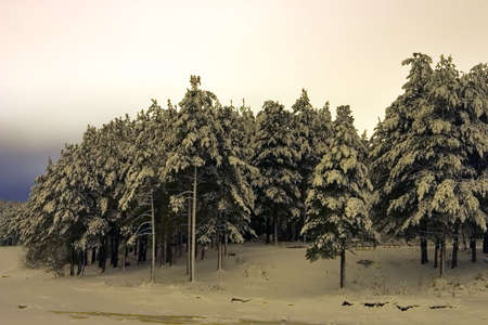 winter coniferous forest, taken off at night Stock Photo - 637232