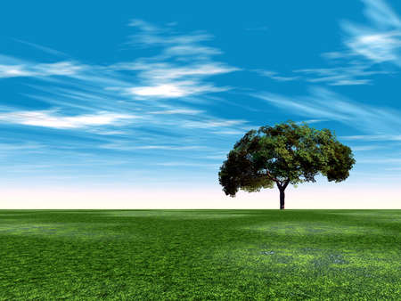 single tree in the field on a background cloudy sky in a summer season Stock Photo