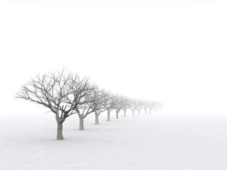 trees in misty haze in a gloomy winter day photo