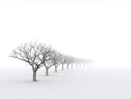 winter day: trees in misty haze in a gloomy winter day Stock Photo