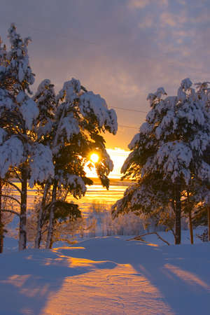 snowbound: snow-bound trees in a park and sunset