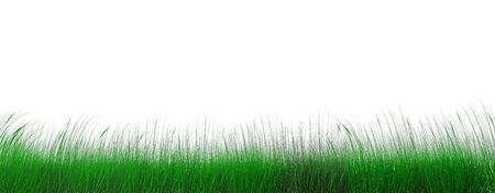 juicy green grass on a background cloudy sky Stock Photo