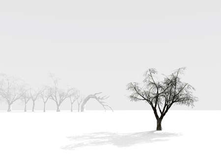 alone winter tree on a background of foggy outlines of trees Stock Photo - 2384817