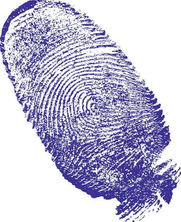 foglio bianco: finger-print uomo, fatto su bianco il foglio di carta blu vernice