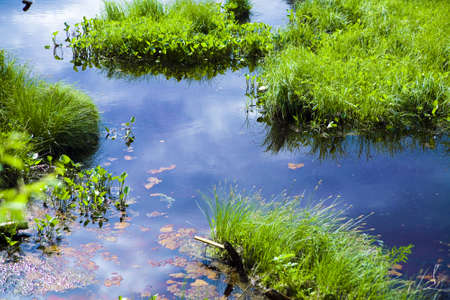 wetland conservation: Pure pond with growing brightly green grass