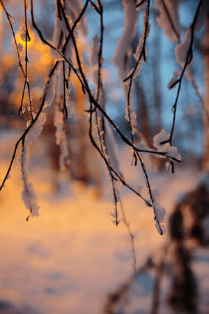 close-up of a branch covered by a snow on blurry background photo