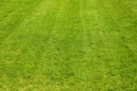 background consisting of juicy green grass on the field Stock Photo - 4266090