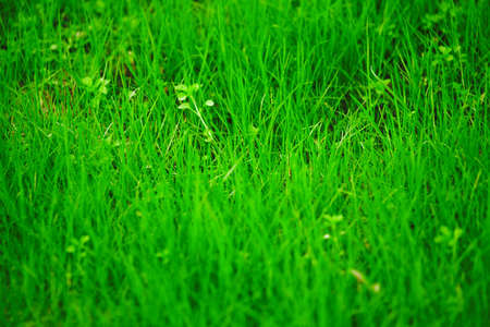 background consisting of juicy green grass on the field Stock Photo - 4798368