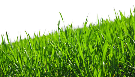 juicy green summer grass on a white background