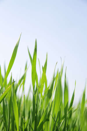 juicy green summer grass on a white background Stock Photo - 5179989