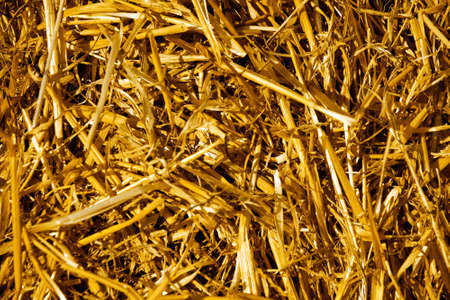 Background from the dry yellow straw which has remained after harvesting photo