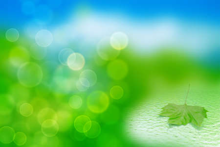 single green leaf in water on a tender blurred background Stock Photo - 7436899