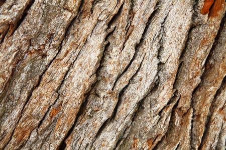 marqueteria: fragmento de la superficie de madera vieja y de color marrón Foto de archivo