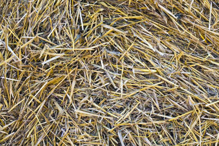 Dry straw as a natural background photo