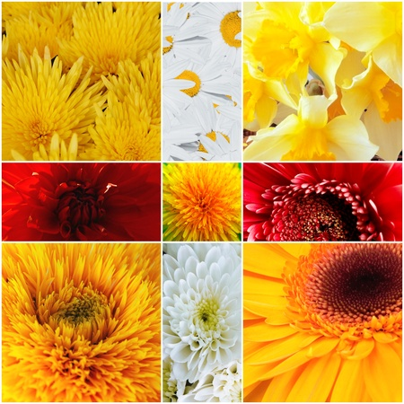 Yellow and red petals of gentle flowers Stock Photo - 12610502