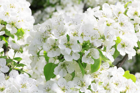 Gentle white flowers in a spring sunny day photo