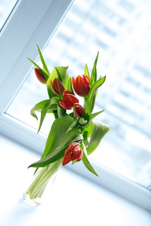 tulips in vase: Beautiful red tulips in vase with light from window