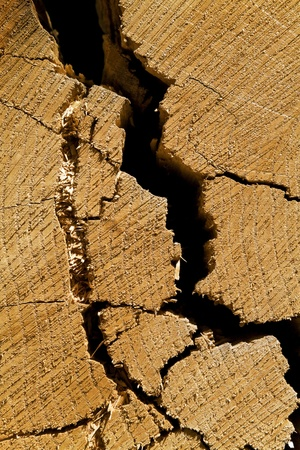 blasted: cracked wood as a natural background Stock Photo