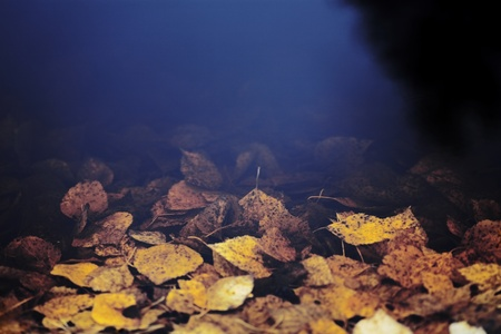dark water and drowning yellow autumn leaves photo