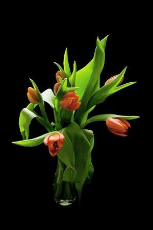 tulips in vase: bouquet of red tulips on black background Stock Photo