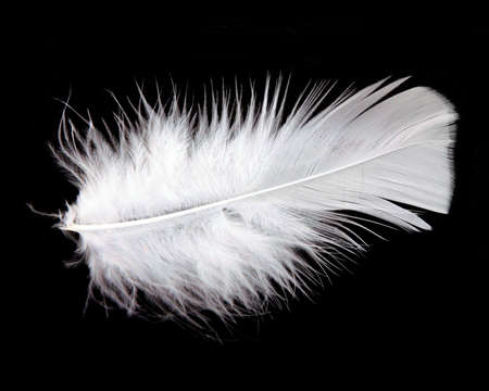 weightless: white feather