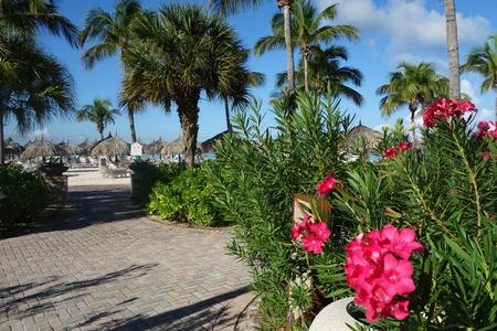 cabane plage: Fleurs, Palmtrees, Cabine de plage dans les tropiques