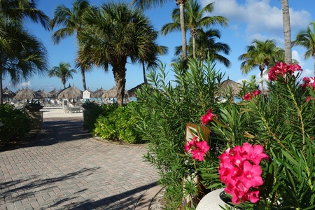 palmtrees: Flowers, Palmtrees, Beach Hut in Tropics Stock Photo