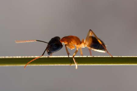 feeler: Ant macro