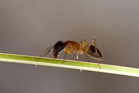 feeler: Ant
