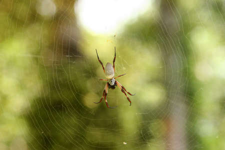 arachnoid: Spider macro Archivio Fotografico