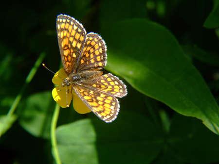 Butterfly in garden closeup Stock Photo - 413134