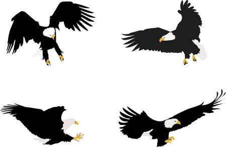bald eagles illustration
