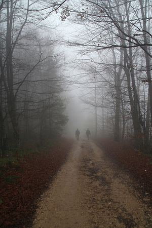 two man walking the country road covered in fog photo