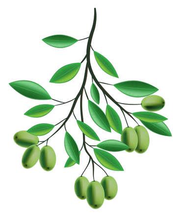 Olive Branch illustration Stock Vector - 8381735