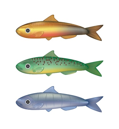 Colorful fish vector illustration Stock Vector - 18021379