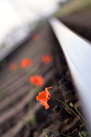 poppy on the railroad Stock Photo