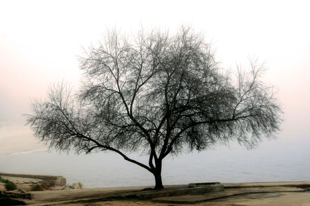 Degradation of the ends of branches because of a fog Stock Photo