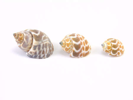 Three shells on a white background Stock Photo - 5677444