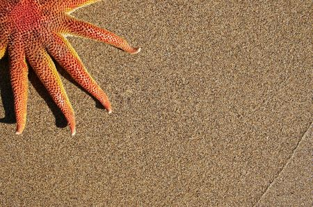 Orange starfish cornered with sand background Stock Photo - 307371
