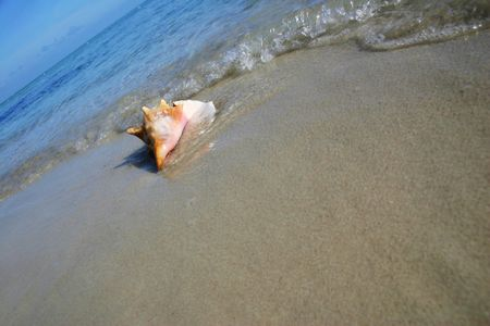 Angled shot of conch on tropical beach photo