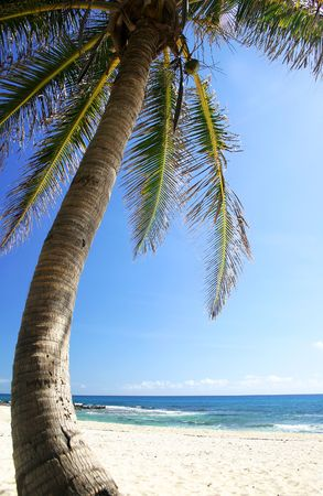 Coconut tree on Mexican coast photo